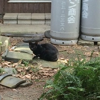 劣悪環境で暮らす 約1歳 黒猫ちゃん
