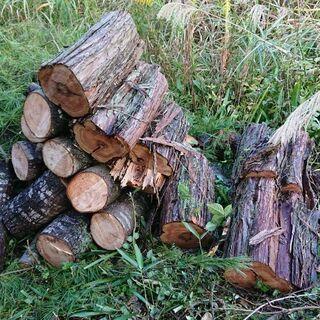 薪木(松が多いです)