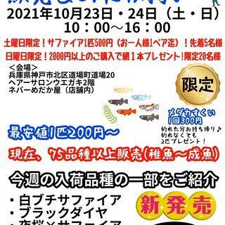 お得な企画します☆品種改良メダカすくいイベント2021年10月2...
