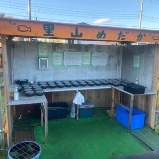 【ネット決済】里山めだか無人販売所 里山公園前  10/20出店