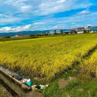 (残り4本)令和3年 獲れたて新米 奈良県産 ヒノヒカリ 30k...