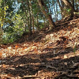横須賀・衣笠・久里浜の方必見!森の中にある完全無農薬の農園 小矢部農園