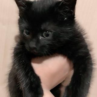 黒猫の子猫を保護しました♪