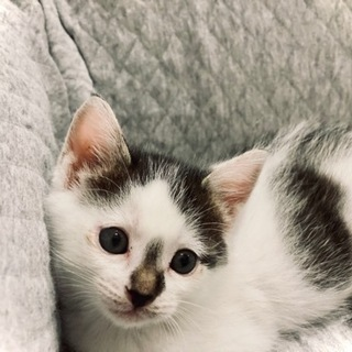 保護猫 1ヶ月 里親募集
