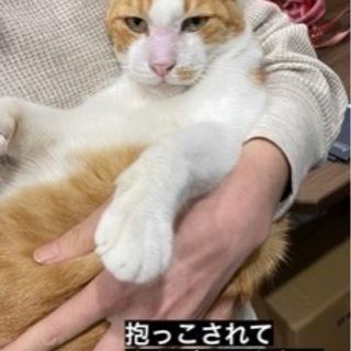 老猫 とにかく撫でてくれる方、家族になってください^_^