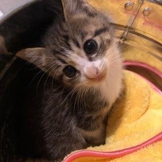 生後1ヶ月半子猫 男の子 可愛いです