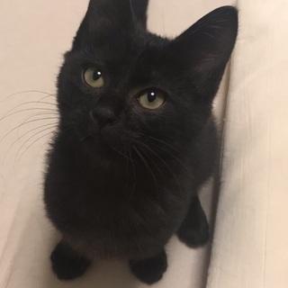 寂しがり屋さんな黒猫の女の子です!