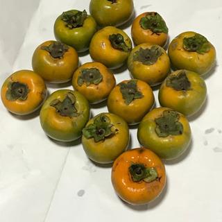 無農薬の柿15個セット