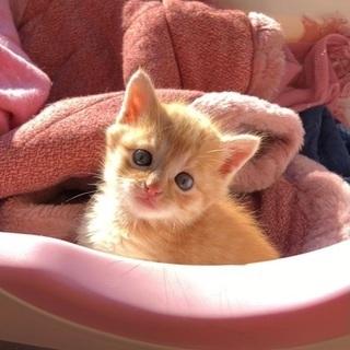 とても可愛い仔猫です