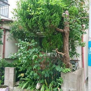 花壇撤去(庭木・植木)で『土地の有効活用』❕