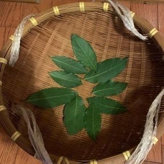 完全無農薬!ローリエ葉、月桂樹の葉(乾燥)50枚!おまけ付…