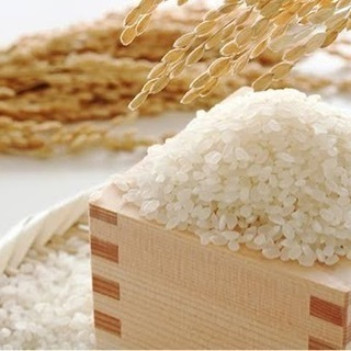 令和3年 新米 丹波・南丹市産 献上米 玄米