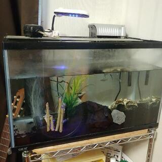 水槽一式「熱帯魚」売ります!