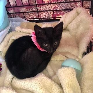 ワンポイント黒猫女子