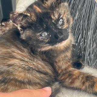 野良猫の子猫です サビ柄 9月生まれ