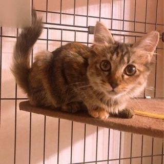 長毛のサビ猫さん