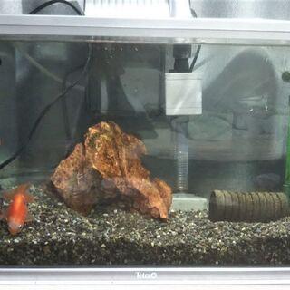 金魚飼育セット一式
