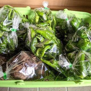 新鮮野菜 無農薬