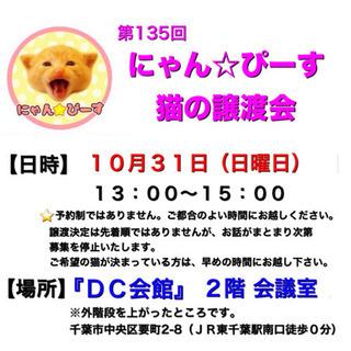 10月31日(日)🌸にゃん☆ぴーす猫の譲渡会🌸「DC会館」JR東...