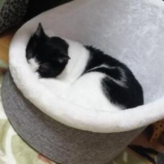 【ネット決済】★新品 TRIXIE トリクシー 猫ベッド★高級品...