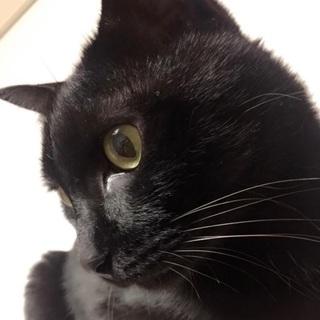 黒猫ジジ♂