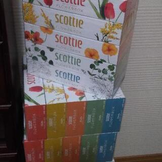 スコッティティシュー 6セット