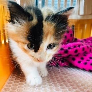 子猫の里親探してます。