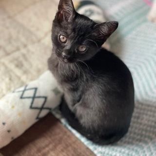 黒猫🐈⬛女の子里親募集