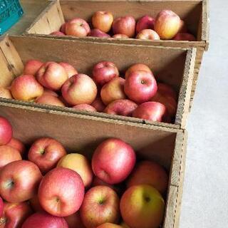 りんごを販売致します!
