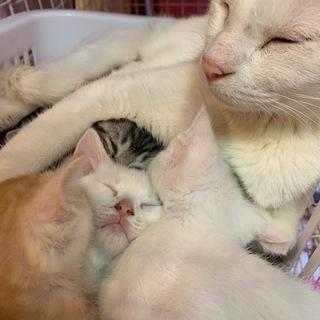 9月12日産まれの赤ちゃん猫里親大募集 6匹産まれました