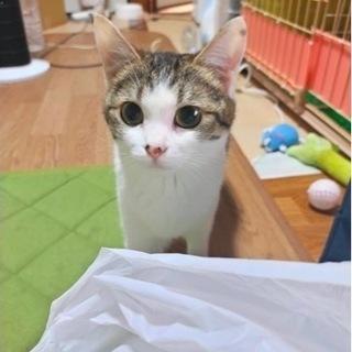 三毛猫(保護猫)
