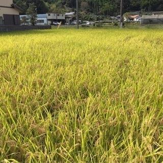 令和3年産無農薬新米収穫終わりました🚜
