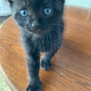 黒猫ちゃん 生後一ヶ月