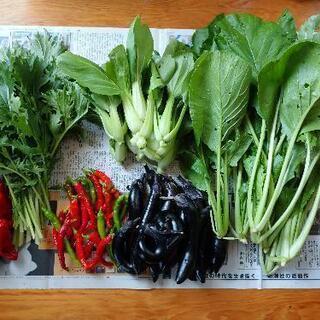 決まりました♪無農薬、野菜セット、秋茄子、小松菜、チンゲンサイ、...