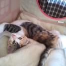 子猫が一匹います。