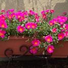 季節の花をご自宅に!