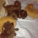 先月産まれたばかりです‼子猫の里親を探しています。