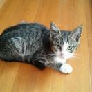 生後3ヶ月前後子猫