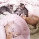 子猫5匹を助けて…!!