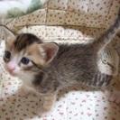 生後1ヶ月の子猫達