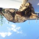 黒トラ、生後3ヵ月