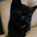 子猫をもらってくれる方はいませんか?(>_<)