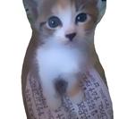 生後一ヶ月の子猫