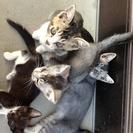 親猫、子猫、産まれたて子猫をもらっていただけませんか?