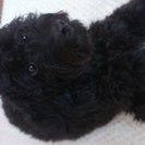 生後7ヶ月のmix犬の新しい家族を探しています。