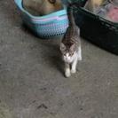 可愛い子ネコちゃんの家族になってくれる方募集しています