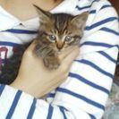 可愛い子猫の里親になってください