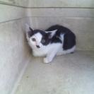 子猫3ヶ月以上4ヶ月以内