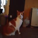 臆病ですが甘えん坊の、ツンデレな男の子の猫です♪猫じゃらしが大好きです♪