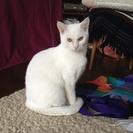 神様の様な尻尾の長い真っ白な白猫